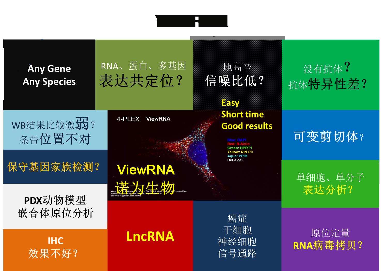 ViewRNA.png